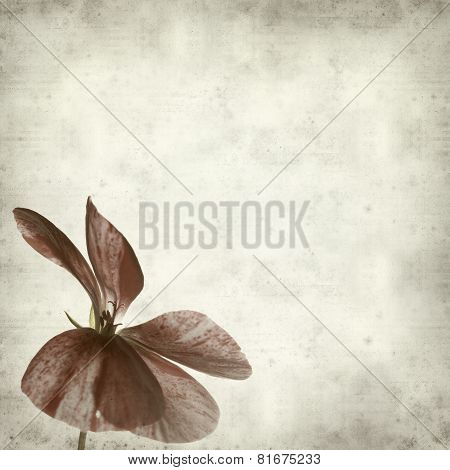 Textured Old Paper Background with Geraniums