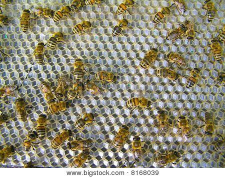 Las abejas-ventiladores