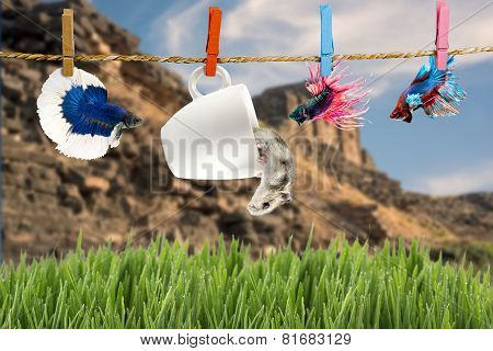 Betta And Hamster Hanging On The Clothesline