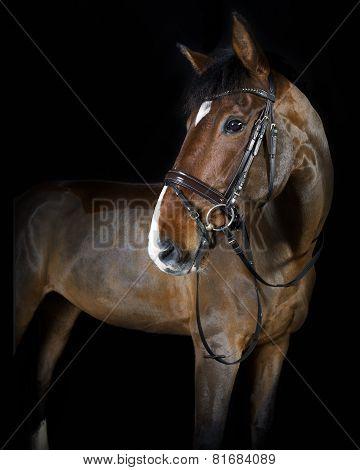 Riding Horse In The Studio
