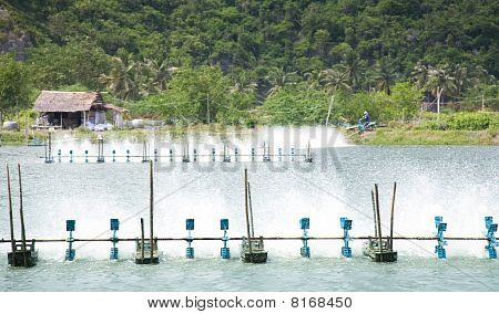 Shrimp Farms