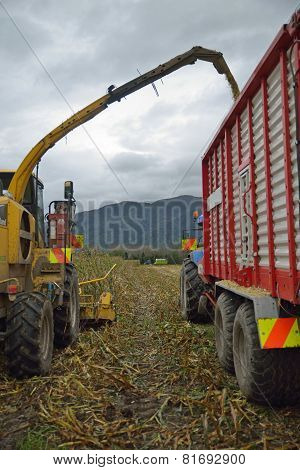 Harvesting Maize For Silage