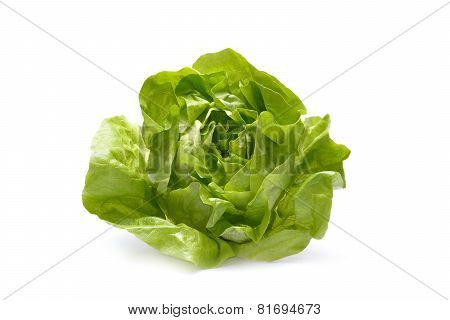 Fresh Iceberg lettuce Isolated On White Background