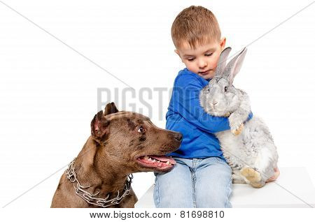 The boy with rabbit and pit bull