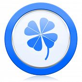 picture of four leaf clover  - four - JPG
