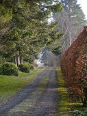 picture of driveway  - A tree lined country driveway on a misty morning in Spring - JPG