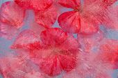 image of geranium  - frozen flora  - JPG