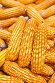image of corn cob close-up  - Close  - JPG
