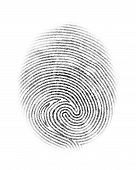 picture of fingerprint  - Fingerprint personal identity and insignia symbol isolated on white background vector illustration - JPG