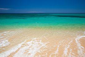 picture of burro  - Fuerteventura Burro Beach part f Grandes Playas de Corralejo on the north of the island - JPG