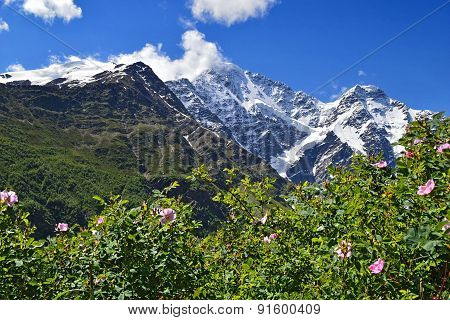 Mountain Peaks And Flowering Bushes