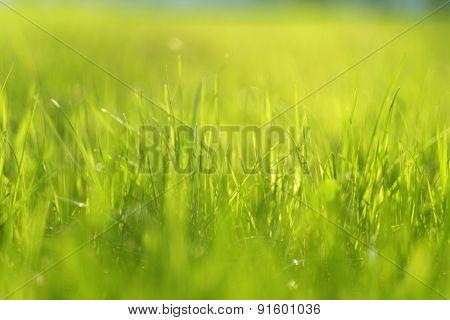 Meadow in sunlight. Shallow depth of field.