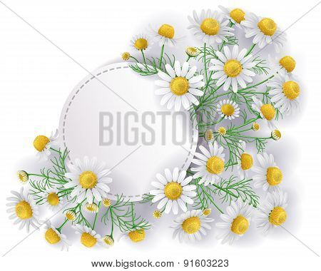 Label With Wild Chamomile Flowers