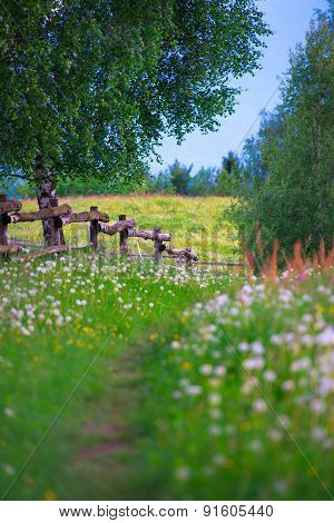 Mountain Trail In The Middle Of The Flowery Meadow