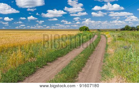landscape with wheat field and dirty road on the edge