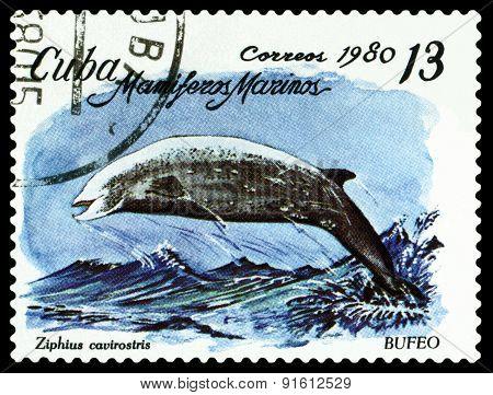 Vintage  Postage Stamp. Beaked Whale.