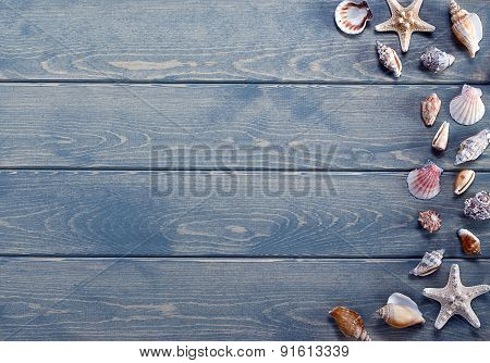 Summer Background With Sea Shells.