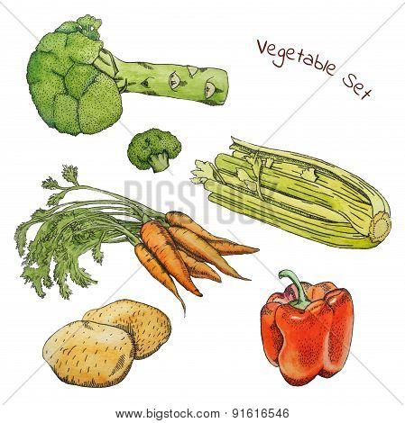 Watercolor vegetable sketches set with ink contour
