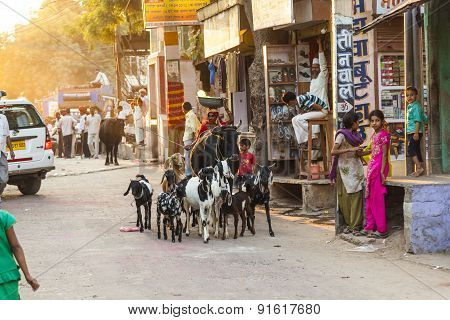 Woman With Ox And Her Goats  Pass The Old Bazaar Street