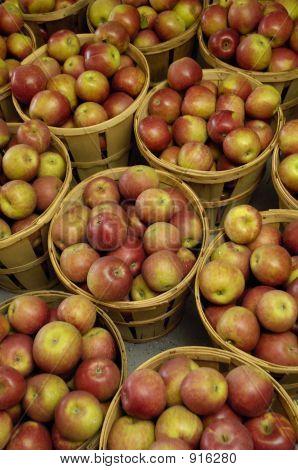Apple Bushels