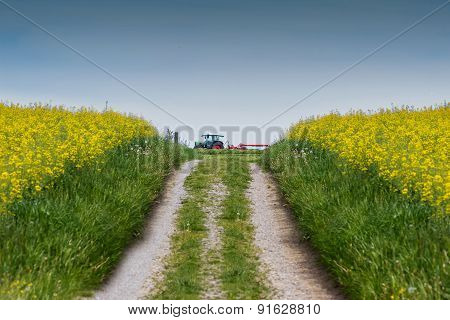 Natural Footpath At A Rapseed Field With A Tractor At The End Of The Walkway
