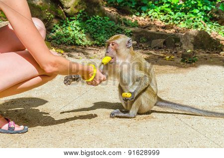 Young woman feeding small monkey with banana
