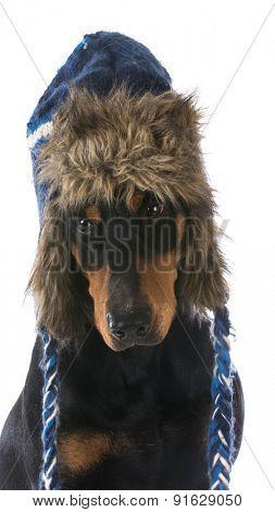 winter dog wearing hat - doberman pinscher