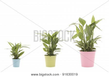 Plants in a row from smaller to bigger in a white background Growth concept