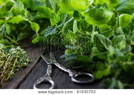 Fresh Herbs Cut In Home Garden