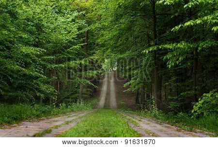 beautiful road in the green forest move up