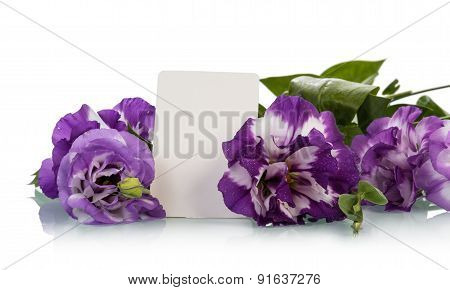 Greeting card with purple flowers