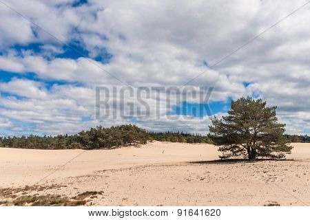 Sand Plain And Dunes In A Dutch Nature Reserve