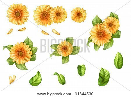 set of isolated yellow gerbera flowers and leaves