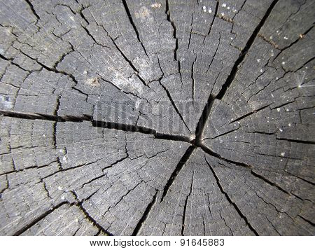 Tree Stump Texture Background