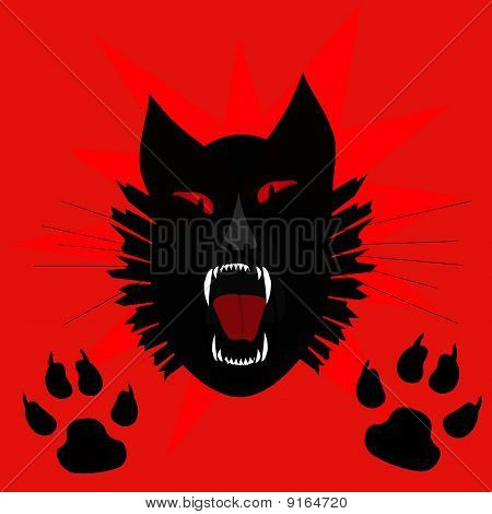 black cat scream