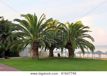 sprawling palm trees on the beach Hotels