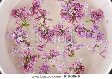 Fresh lilac flower petals floating on water in the white ceramic bowl.