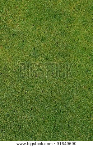Putting green on golf course - Aerated - maintenance background vertical