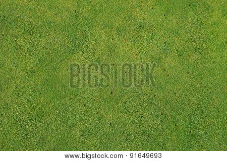 Putting green on golf course - Aerated - maintenance background