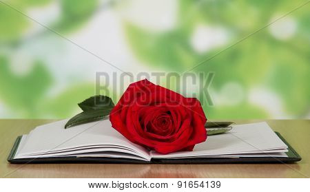 Open book with a red rose