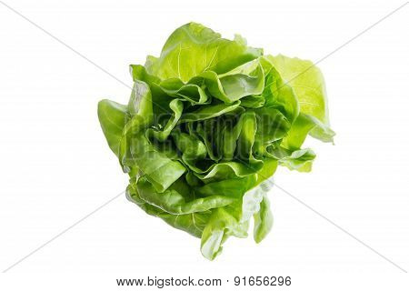 Head Of Fresh Organic Butter Crunch Lettuce