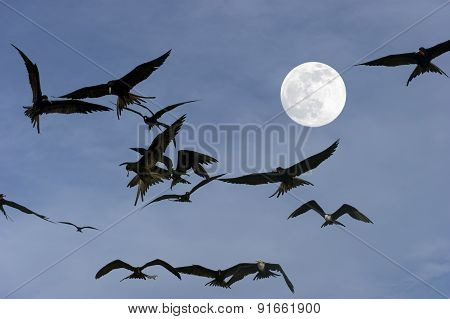 Birds Flying By Spooky Moonlight