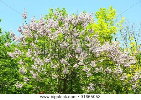 Flowering tree over blue sky background