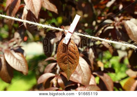 Leaf hanging with pin on rope over nature background