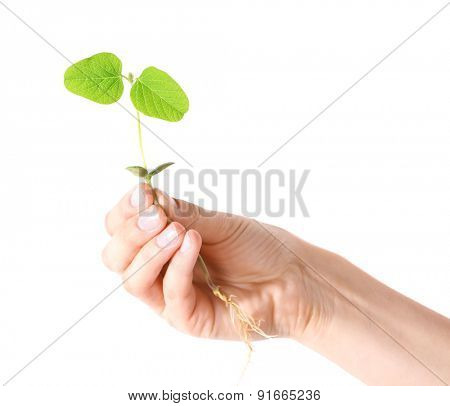 Hand holding fresh green sprout isolated on white
