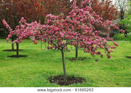 Beautiful pink flowering tree outdoors