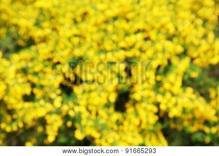 Closeup of bright yellow flowers