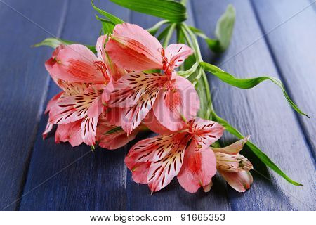 Beautiful alstroemeria on wooden background