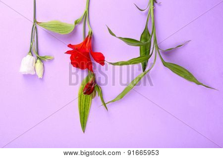 Different flowers on colour background