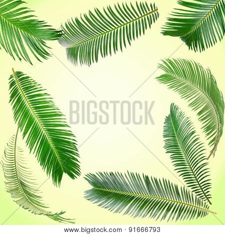 Frame of green palm leaves on light background